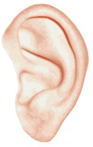 Everything about the Ear